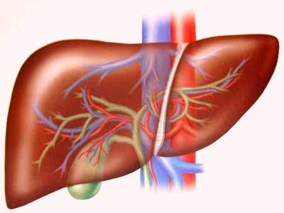 Xơ gan - Nguyên nhân, triệu chứng và cách phòng ngừa 150411xogan 634384620929870000