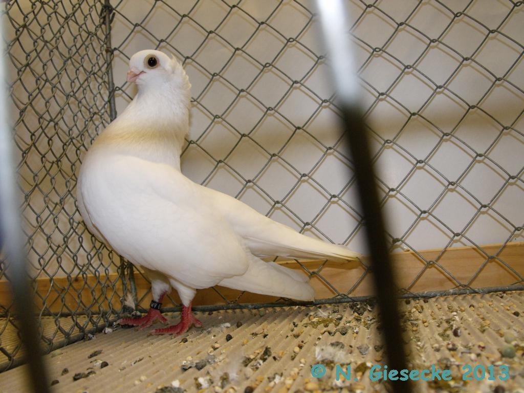 South Batschka Tumbler White