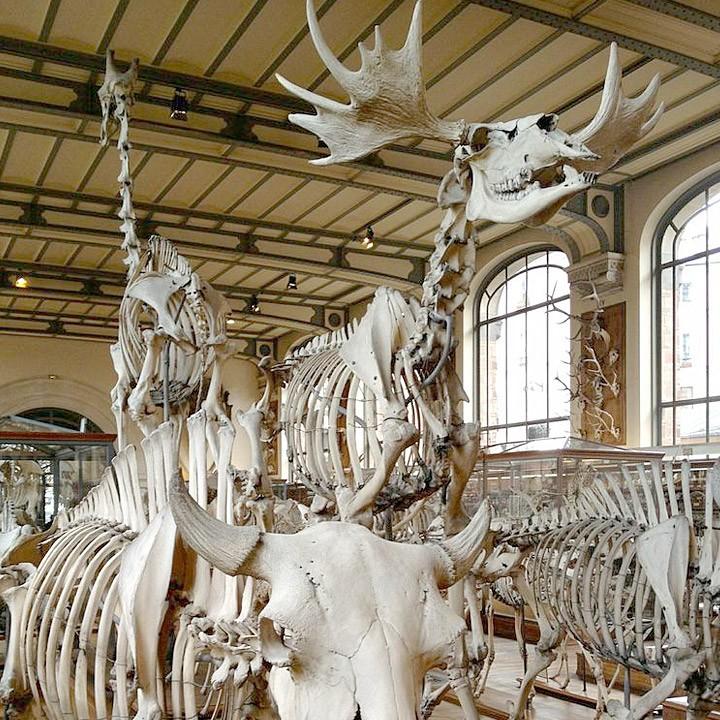 The Galerie de Paléontologie et d'Anatomie Comparée