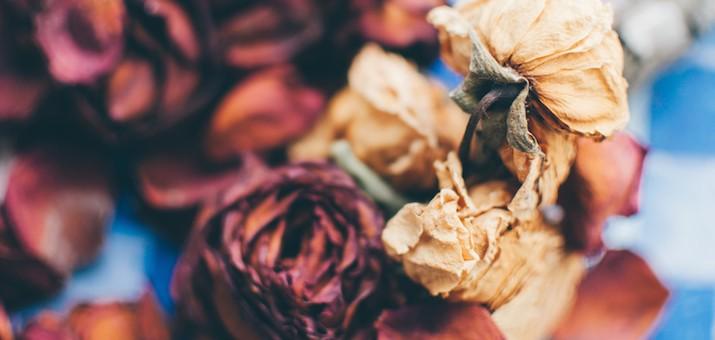 tuenight aliza sherman death birth child rebirth roses