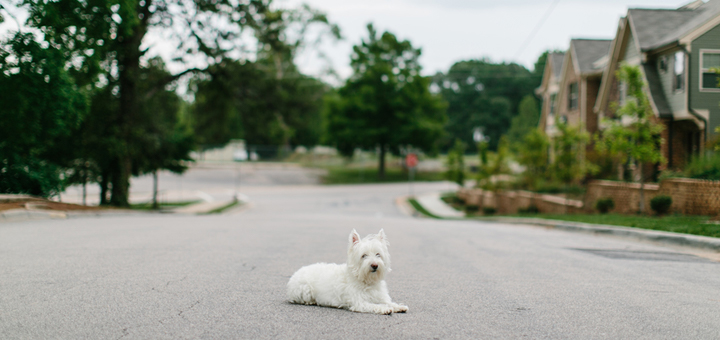 A dog in his neighborhood. (Photo: Stocky)