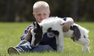 Einstein, the world's smallest horse according to the Guinness Book of Records. AP Photo.