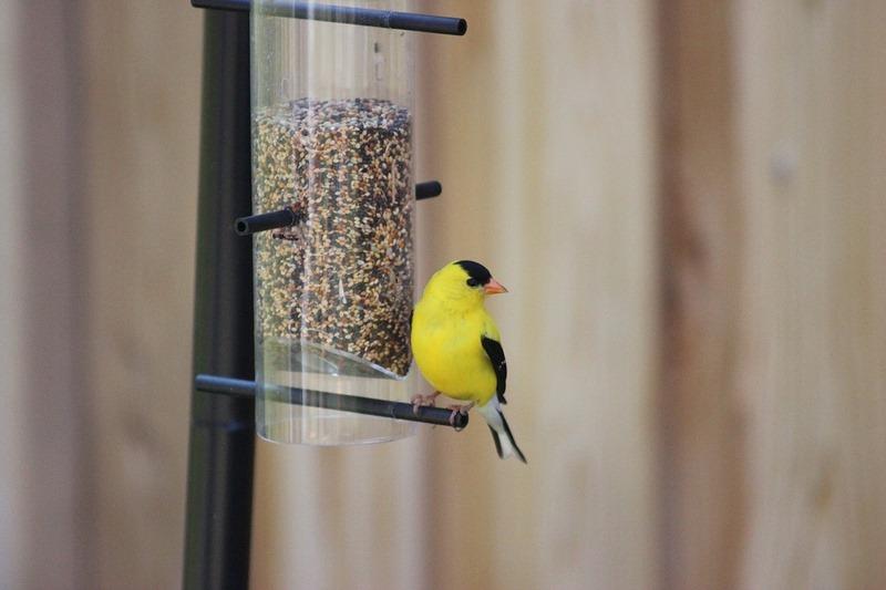 El estrés en aves