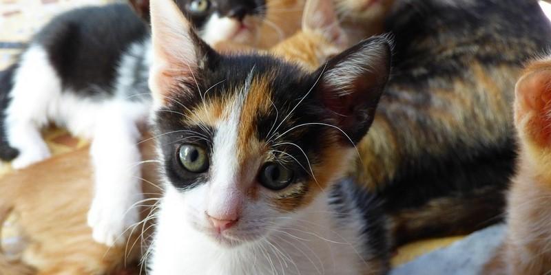El estrés en gatos