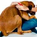 El estrés en perros