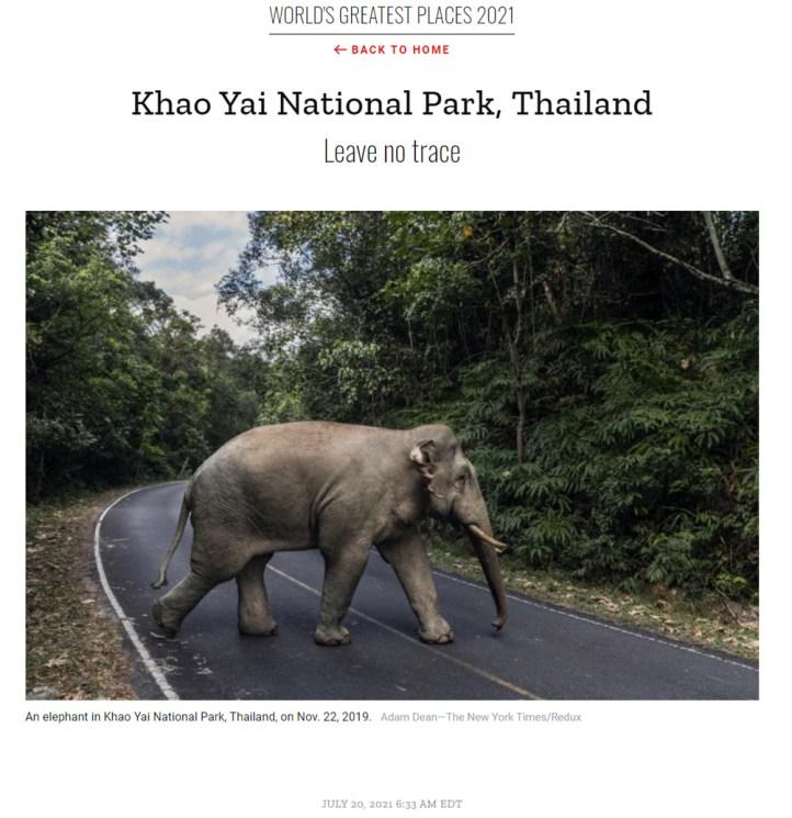 Un elefante en el parque nacional de Khao Yai - Foto: TATnews