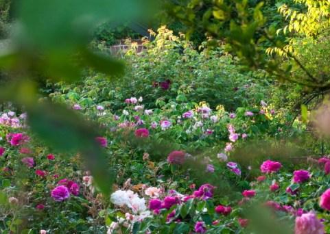 Rose%2520Garden_DSC2732-2cr