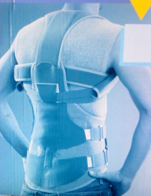 tulang-punggung