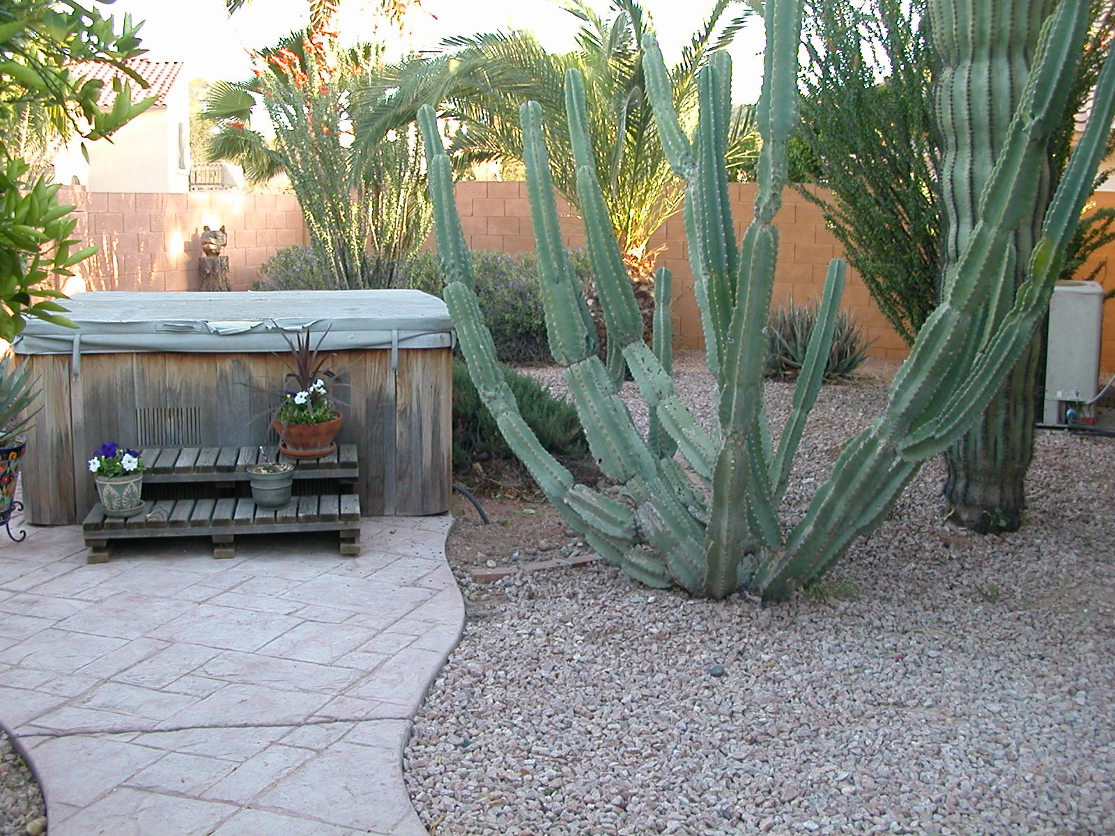 Before, Ocotillo & palm that were moved are in background