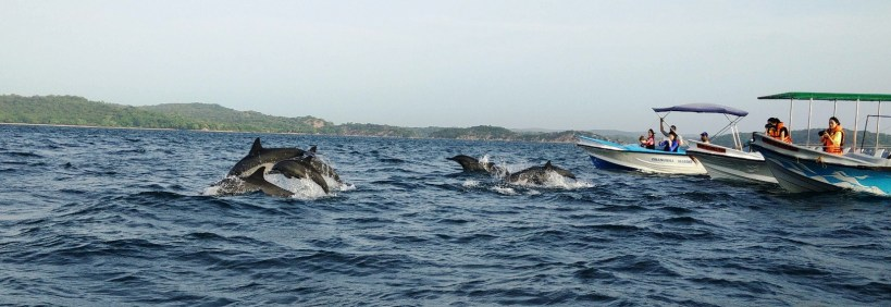 dolphin-watching-trincomalee–photo-by-nicole-figueiredo