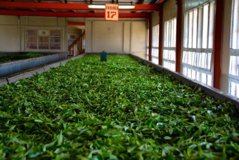 tea-factory-at-nuwara-eliya