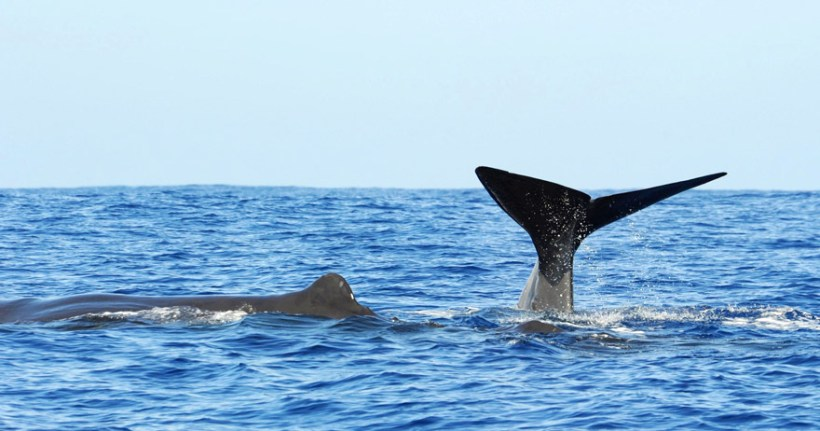 whale-watching-sri-lanka-1445870402