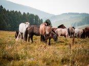 Pferdeherden