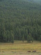 mongolischer Wald mit Tier