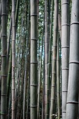 Arashiyama Bamboo II