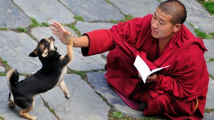 Korejas suņu vārdi