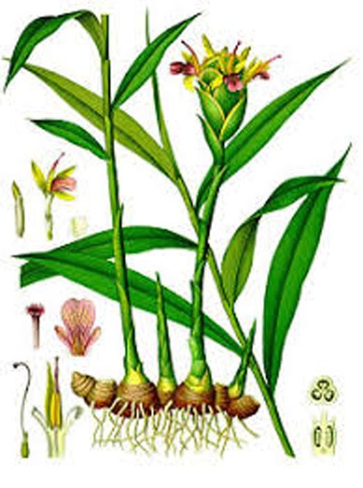 copy of Vatika Olive Hair Oil
