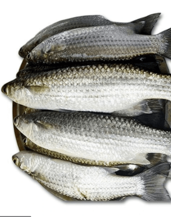 Bata Fish-Tukwila Online Grocery in Germany1