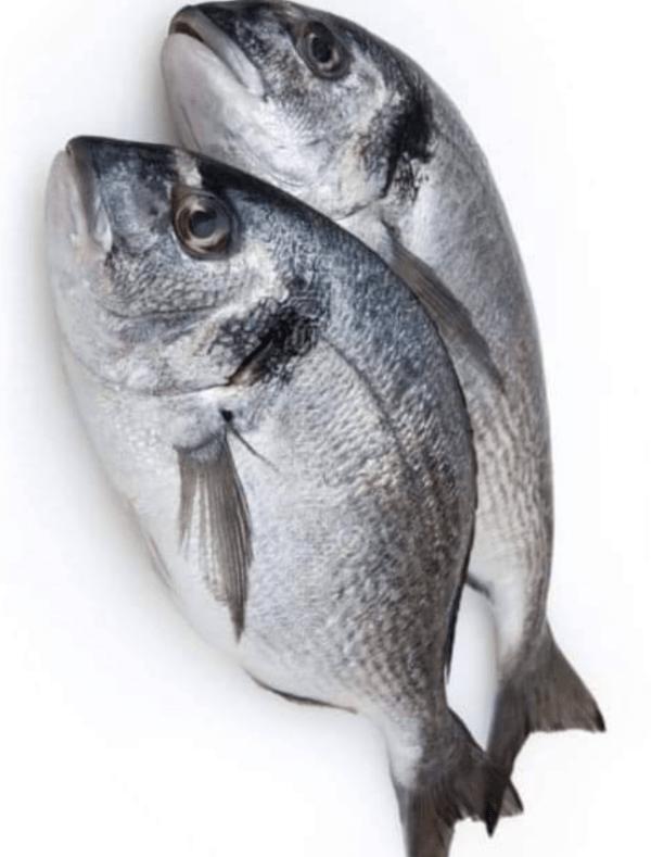 Dorado fish-mach-Tukwila online market Germany