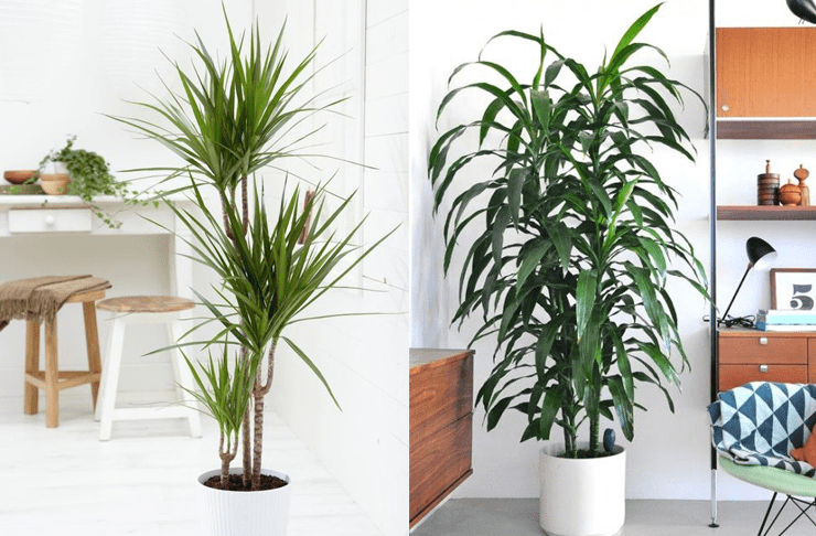 8 Super Cute Indoor Plants To Buy Now Urban List Brisbane
