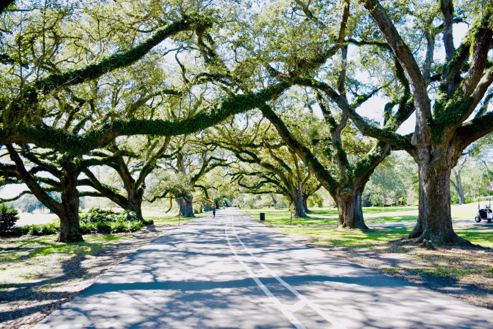Best Springtime Walks to Take in Nola