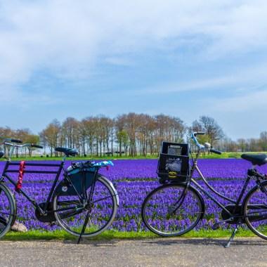 tulpen fietstocht met gids