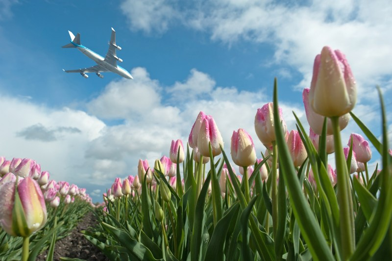 Schiphol Amsterdam Airport Layover Keukenhof