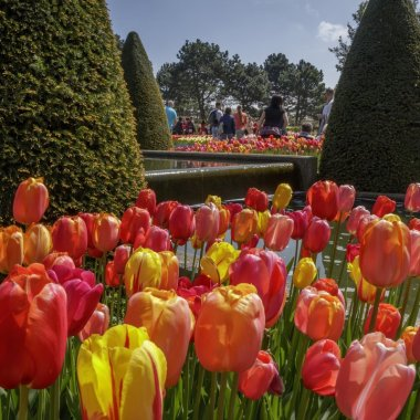 Tips for visiting Keukenhof