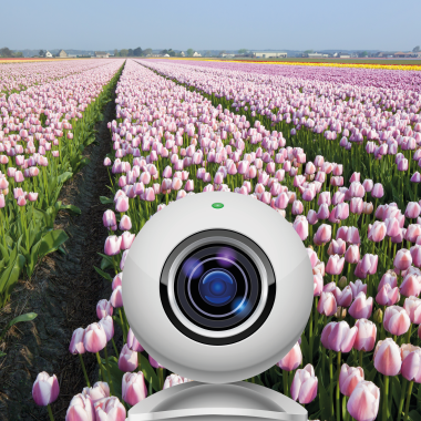 Webcam tulip fields