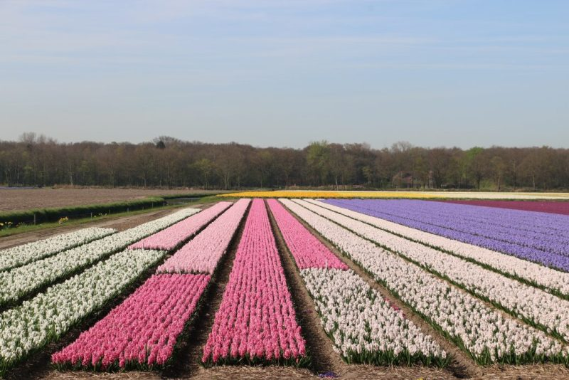 Flower fields area
