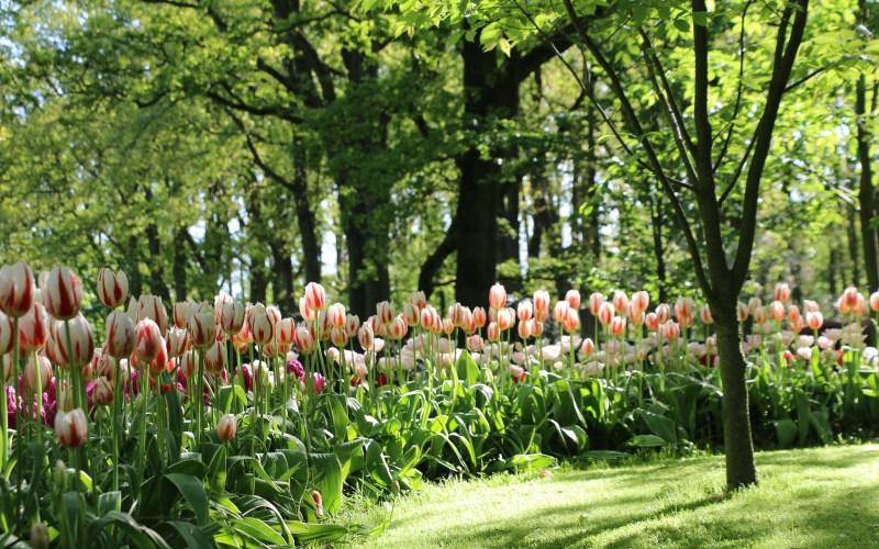 FAQ Keukenhof Gardens