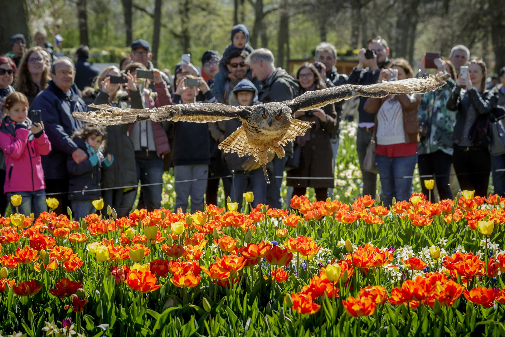 Bird of Prey shows Keukenhof