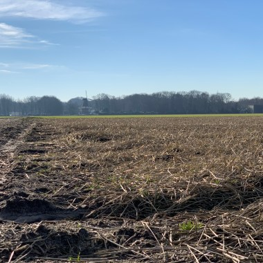 Flower fields february 2019