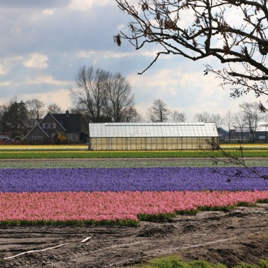 Flower fields 3 april 2019