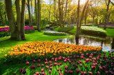 Keukenhof Gardens season pass