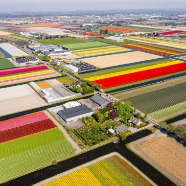 Update coronavirus Tulip Festival Amsterdam