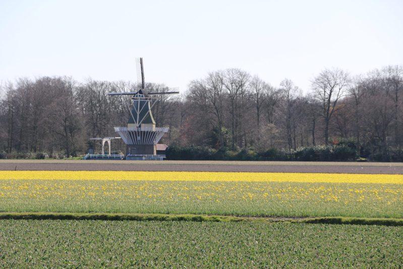 flower fields in Holland on March 25 2021