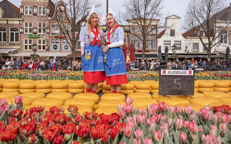 cheese market amsterdam alkmaar