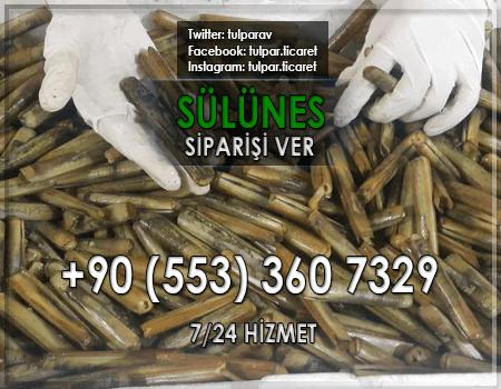 İzmir Canlı Balık Yemi