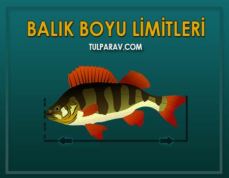 Balık Boyu Limitleri