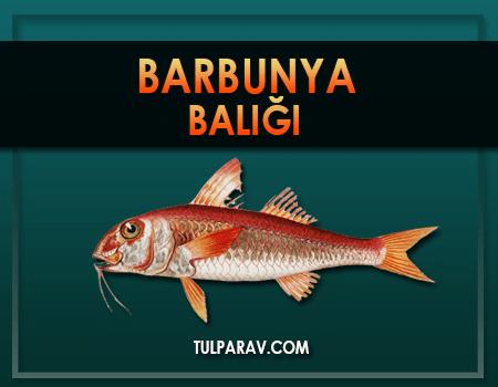 Barbun Balığı