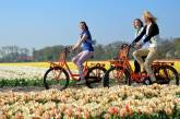 Leihfahrrad bei den Tulpenfeldern von Keukenhof