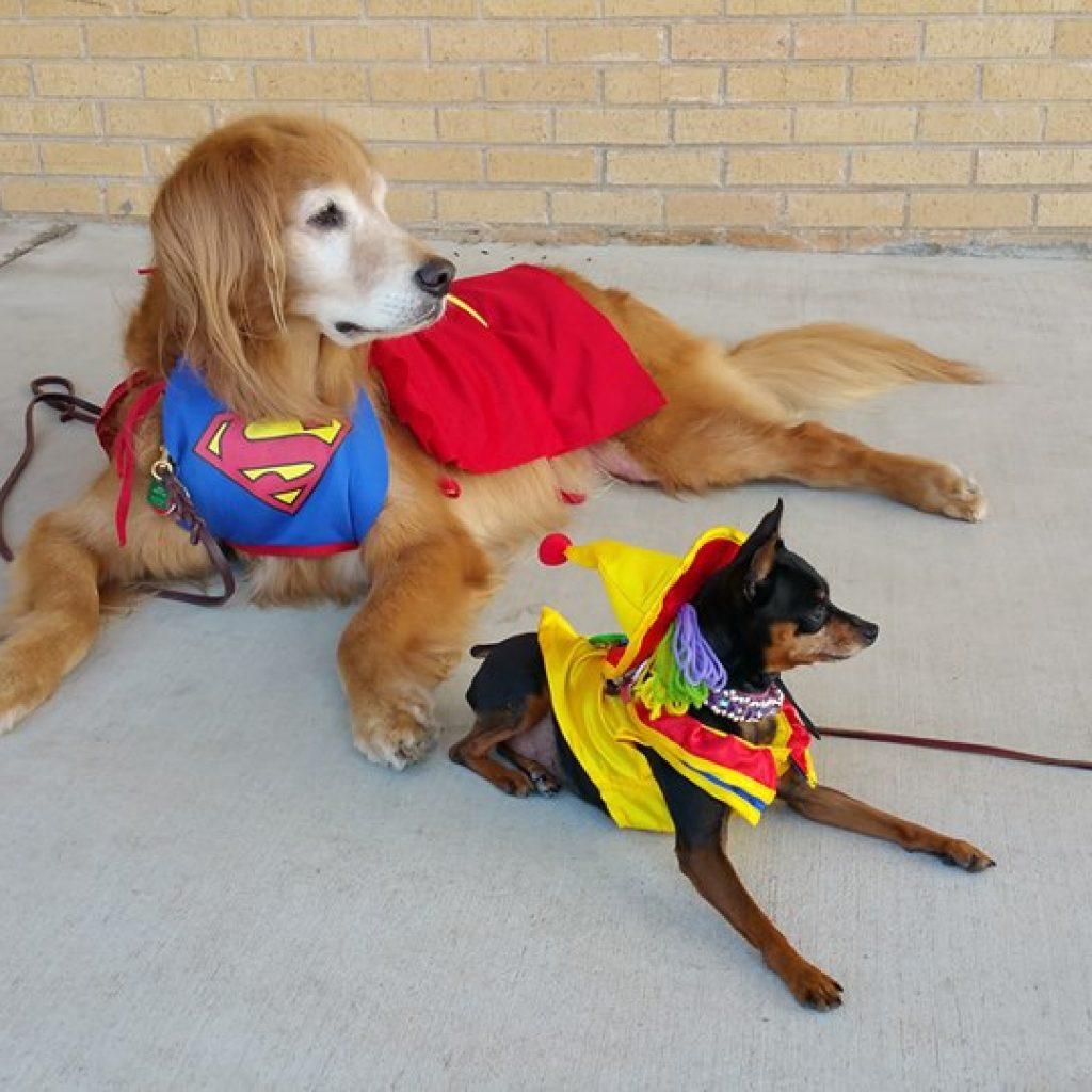 Carnegie Elementary School Visit Tulsa Dog Training Club