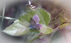 butterfly, insect, leaf