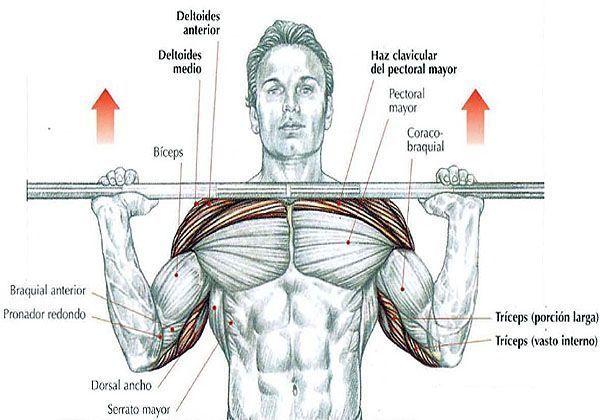 musculos implicados press frontal con barra