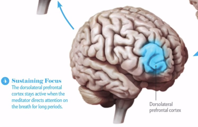 cerebro8