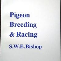 pigeon_breeding_and_racing