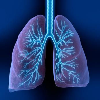 Lungenkrebs Bronchialkrebs Bronchuskarzinom