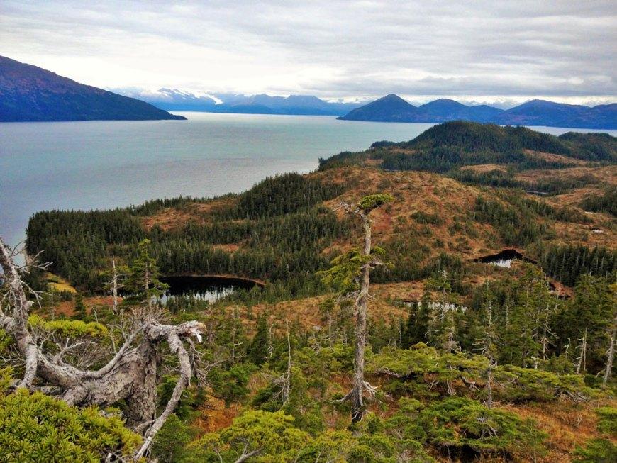 Alaska Glacier Cruise Tundra Adventure 91