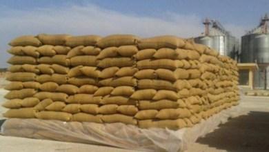 Photo of الإطاحة بعصابة تسرق الحبوب من ميناء رادس وتبيعه في السوق السوداء